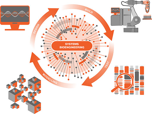 Systems  Bioengineering