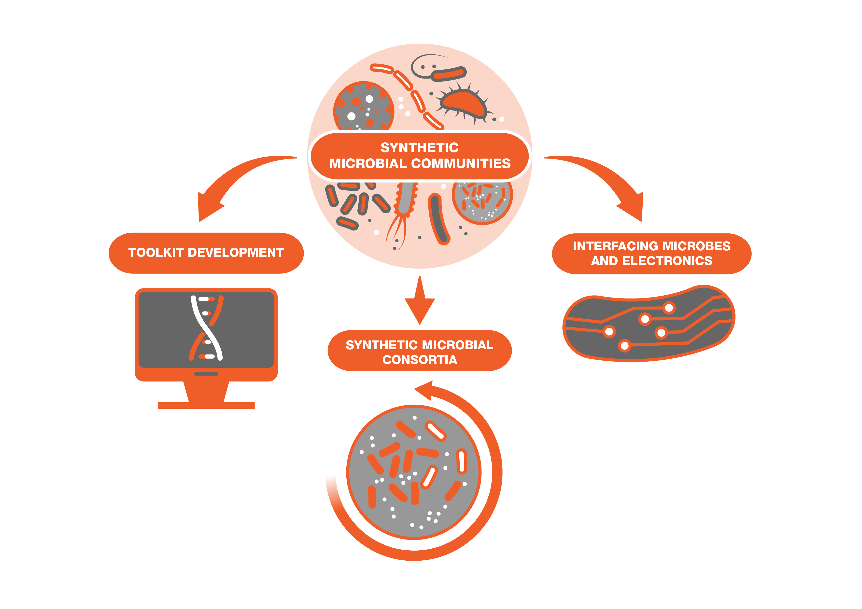 Synthetic Microbial Communities
